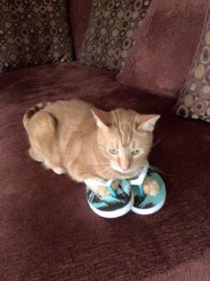 Cat with flip flops