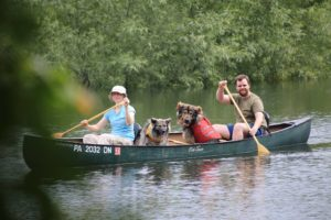 Canoeing with dogs