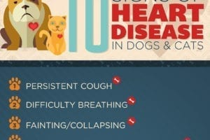 CVCA heart disease