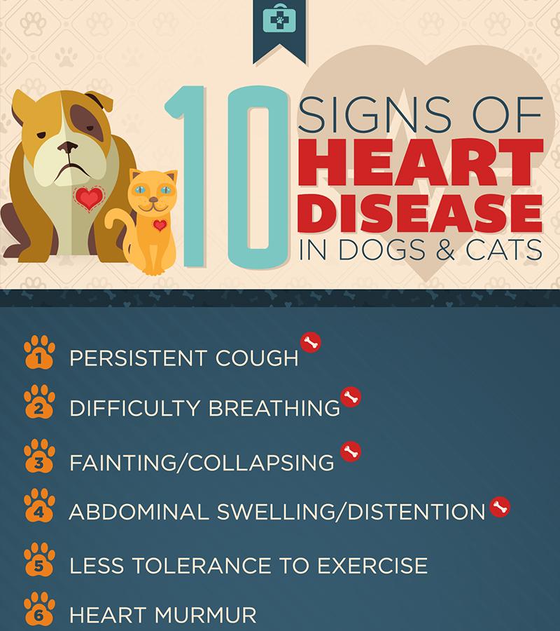 CVCA - Cardiac Care for Pets